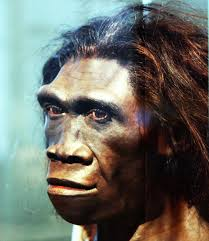Neanderthal Courtesy of Google